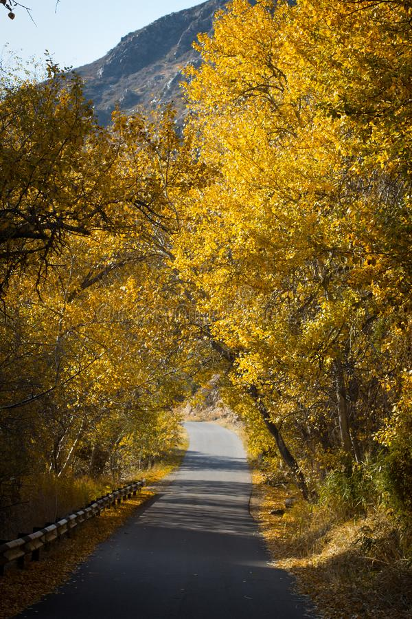 Autumn in the mountains. Yellow trees along the mountain road. Autumn in the mountains near Almaty. Yellow trees along the mountain road royalty free stock photography