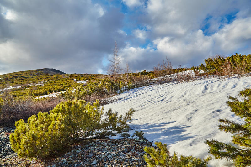 Late spring in mountains. Snow has not thawed yet. Kolyma. Magadan's Area IMG_6658 royalty free stock photo