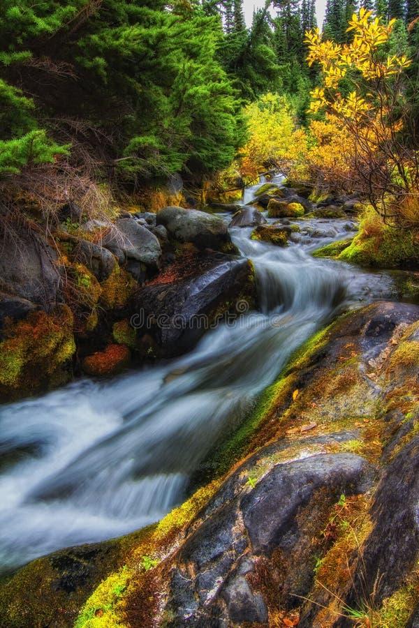 Autumn in Mt. Rainier National Park, Washington State. A stream meanders through the Autumn forest at Mt. Rainier National Park,Washington State stock photography