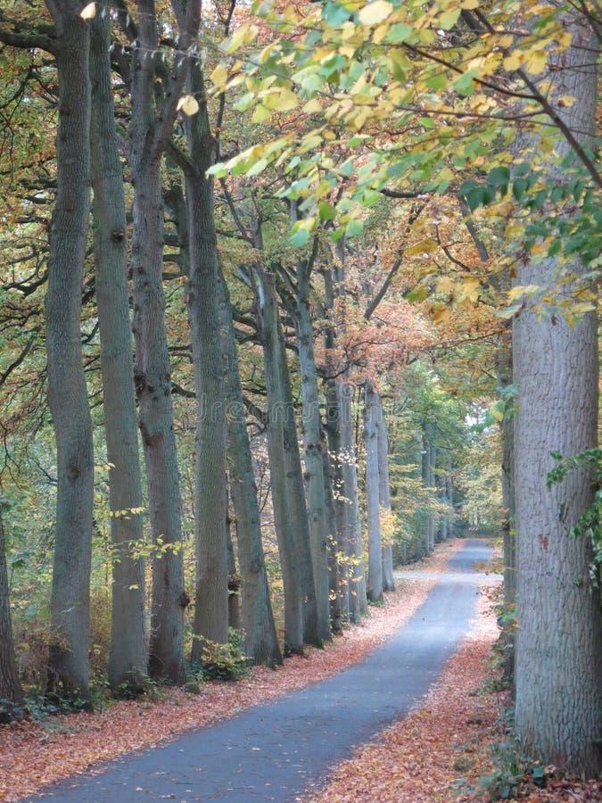 Autumn Mushrooms Sisters royalty-vrije stock afbeeldingen