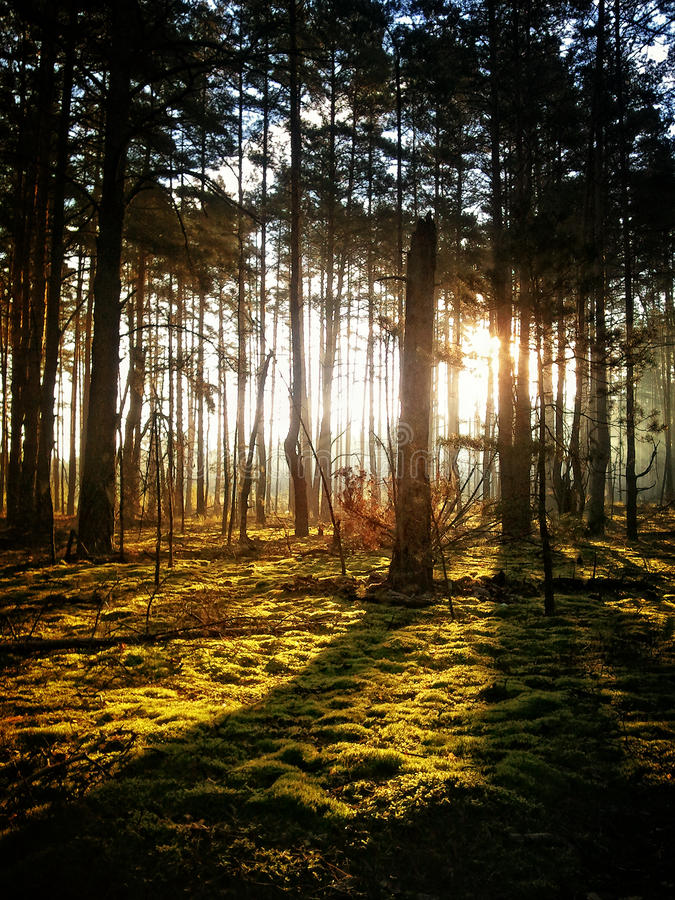 Autumn mysterious forest royalty free stock photos