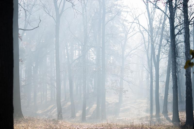 Autumn forest with fog. Irpin. Ukraine. Autumn mysterious forest with fog. Irpin. Ukraine royalty free stock photography