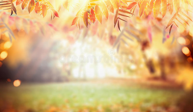 Autumn nature background with colorful fall foliage, pasture and sunbeams royalty free stock image