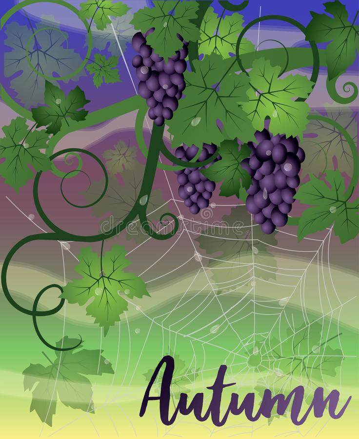 Autumn nature background with grapes and spider web. Vector illustration royalty free illustration