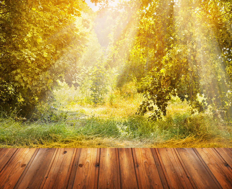 Autumn nature background with wooden terrace and fall tree for 27719 autumn terrace