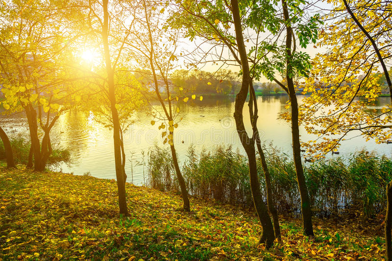Autumn Nature with Colorful Trees and Lake. At Sunny Day royalty free stock photography