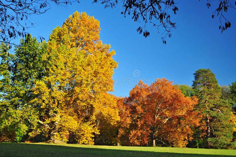 Autumn trees colors royalty free stock images