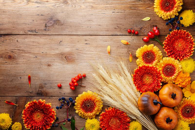 Autumn nature composition with orange and yellow gerbera flowers, decorative pumpkins, wheat ears on table top view. Thanksgiving royalty free stock photos