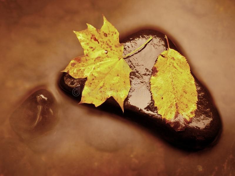 Autumn nature. Detail of rotten orange red maple leaf. Fall leaf lay on dark stone in blurred mirror royalty free stock photos