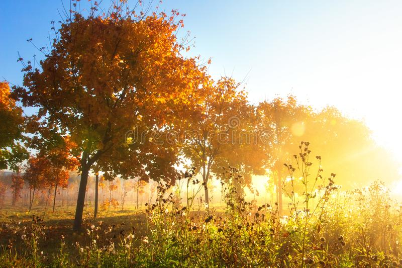 Autumn nature. Fall scene. Autumn landscape of colorful trees in park. Sunny morning in autumn outdoor. Autumn nature. Fall scene. Autumn landscape of colorful stock images