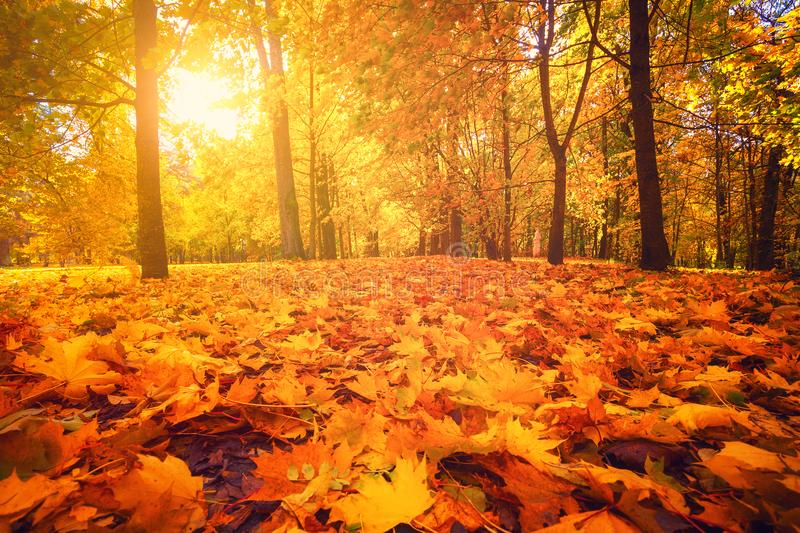 Autumn nature. Fall scene. Tranquil background. stock images