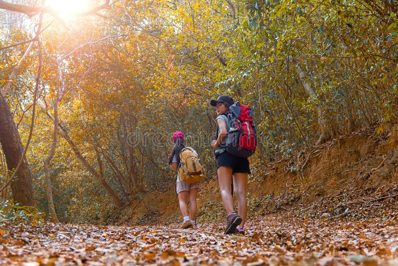 Autumn nature hiker team young women walking in national park with backpack. Woman tourist going camping in forest, select focus royalty free stock image