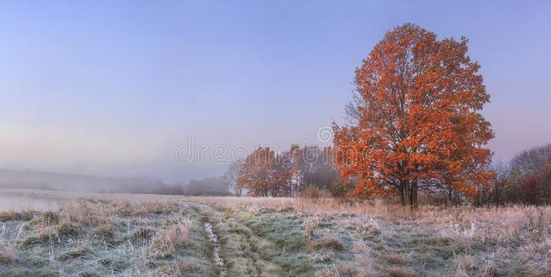 Autumn nature landscape with clear sky and colored tree. Cold meadow with hoarfrost on grass in november morning royalty free stock photos