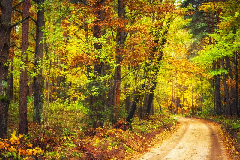 Autumn nature landscape. Colorful autumn forest with yellow trees along road. Path in woodland. stock image