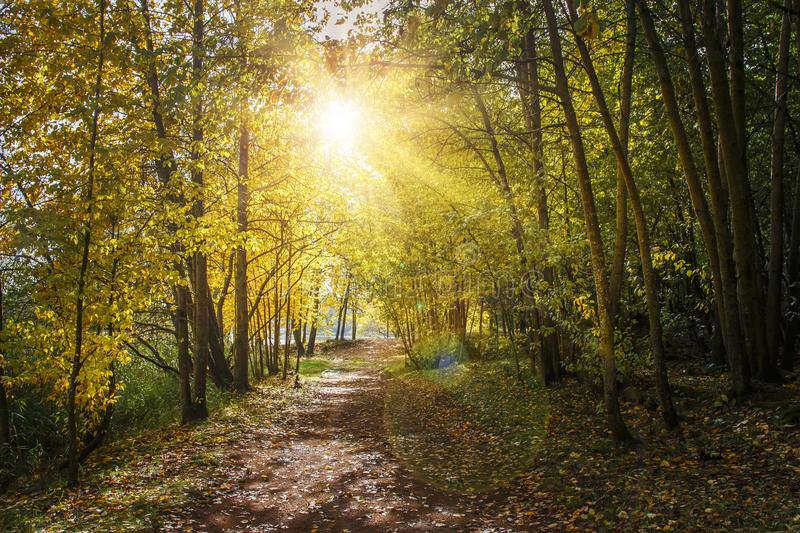 Autumn nature landscape with path in yellow forest. Sunlight in autumn park. Forest road under colorful trees. Scenery of nature stock photography