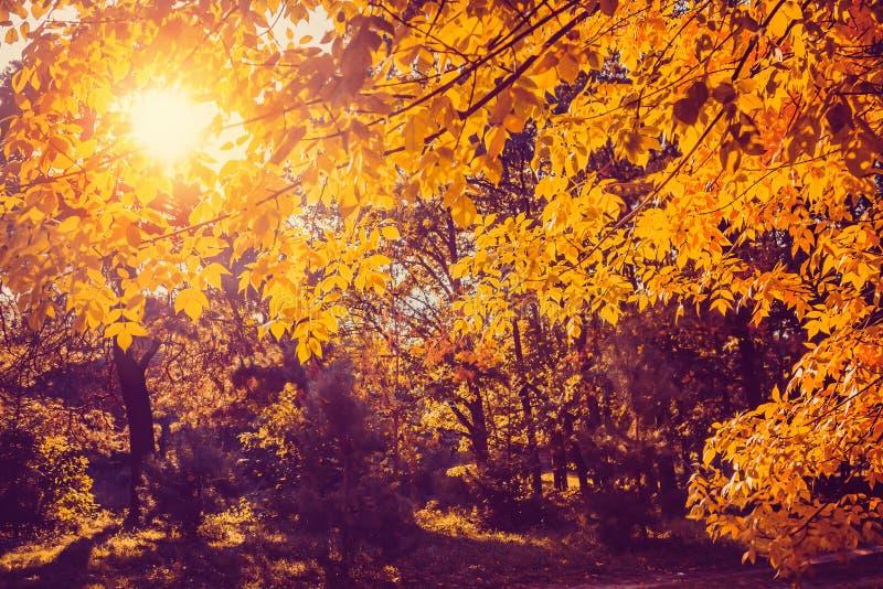 Autumn nature landscape in sunny park. Autumn scene stock image