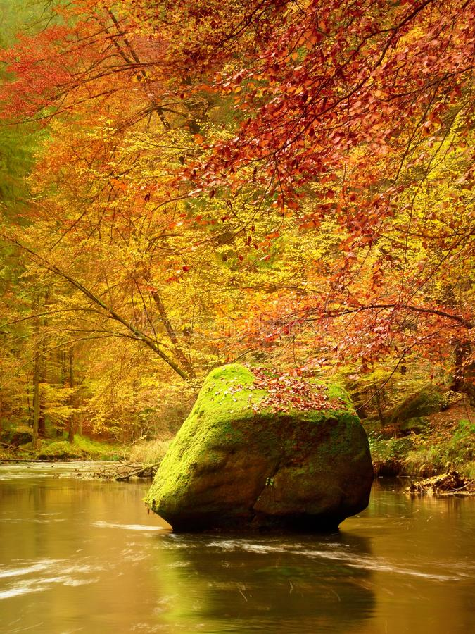 Autumn nature. Mountain river in colorful leaves forest . Mossy and boulders on river bank, green algae royalty free stock photos
