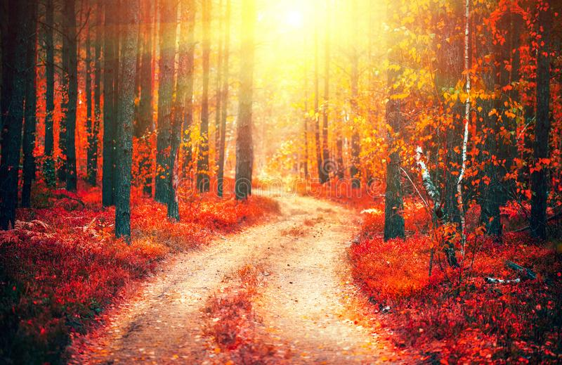 Autumn nature scene. Fantasy fall landscape. Beautiful autumnal park with pathway royalty free stock images