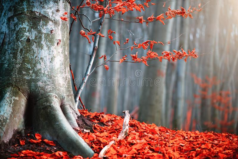 Autumn nature scene. Fantasy fall landscape. Beautiful autumnal park with red leaves and old trees stock images