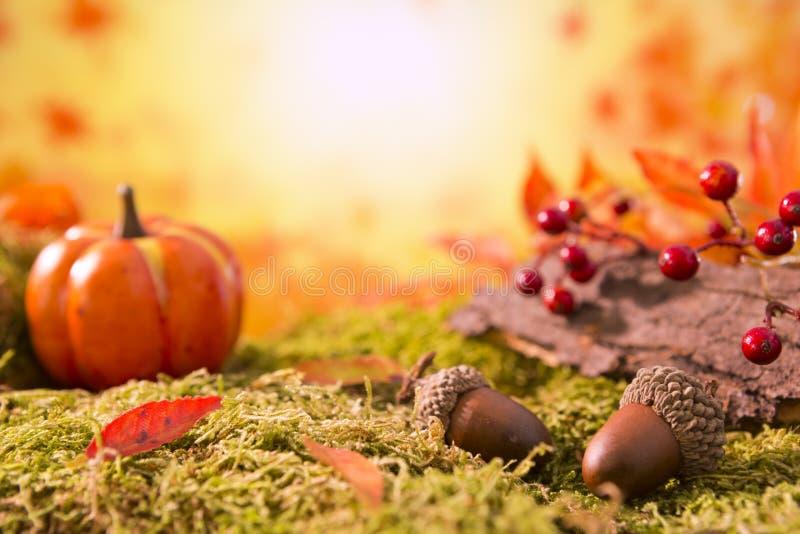 Autumn nature still life in bright light stock photo