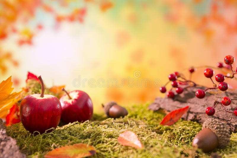 Autumn nature still life in bright light stock images