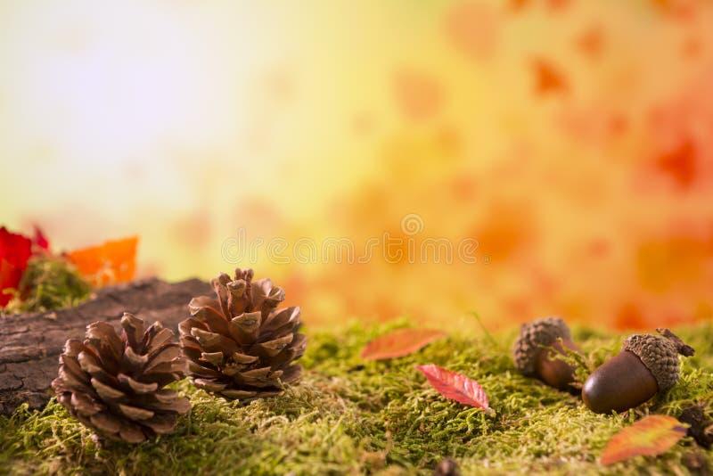 Autumn nature still life in bright light stock image