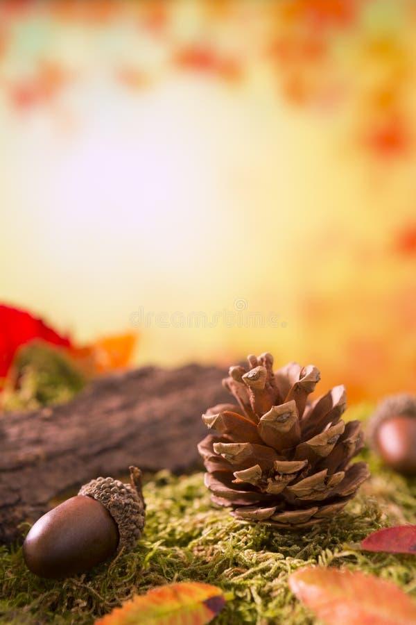 Autumn nature still life in bright light royalty free stock photos