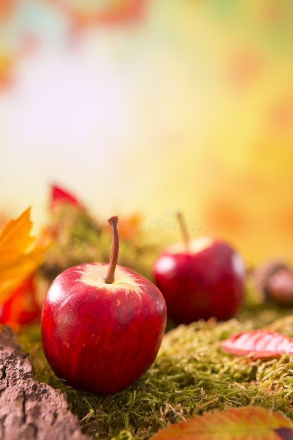 Autumn nature still life in bright light stock photography