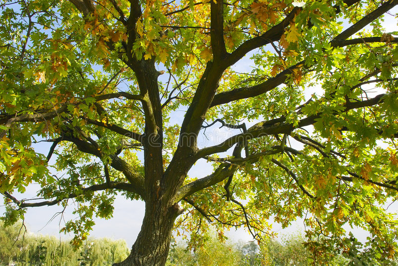 Autumn nature tree background royalty free stock images