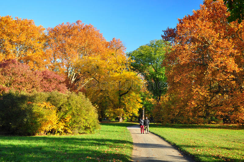 Fall nature trees walk royalty free stock photo