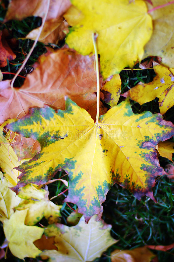 Autumn Nature: Yellow Fallen Leaves In The Park Royalty Free Stock Photography