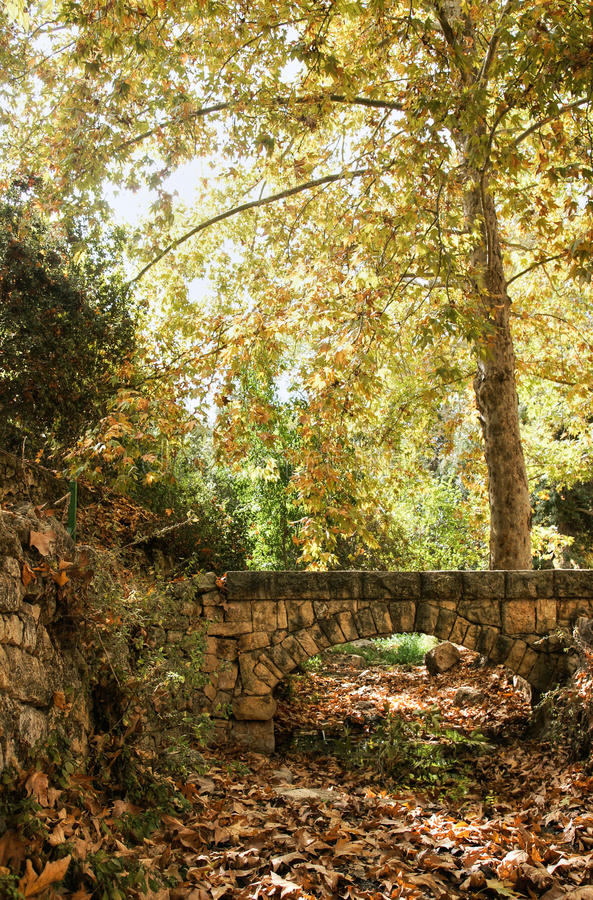 Download Autumn near jerusalem stock image. Image of autumn, park - 28216791