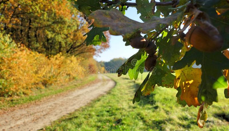 Autumn in Nederland - full of colour. royalty free stock images