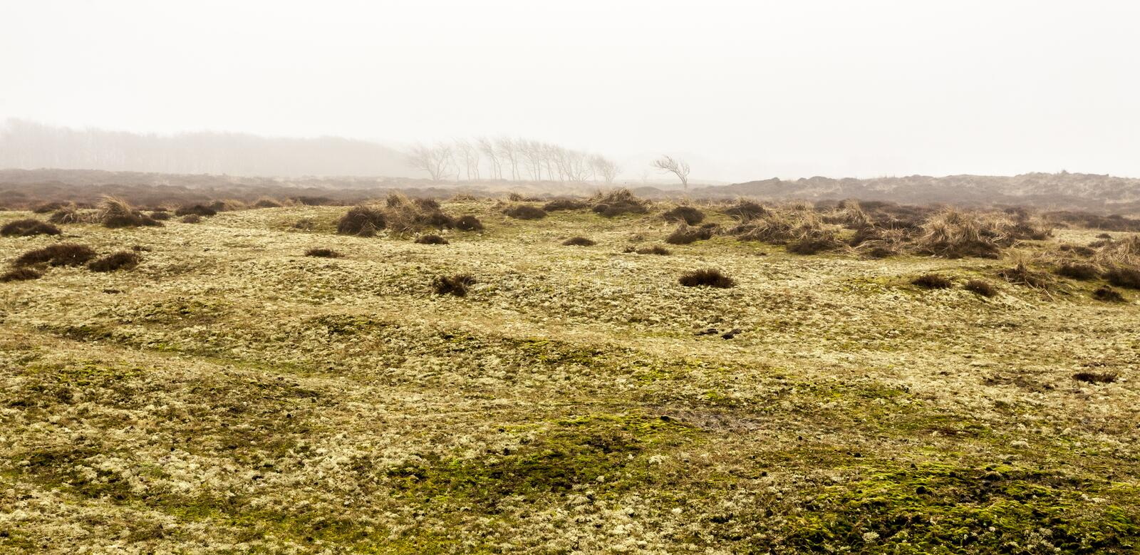 Autumn in the Netherlands. Bare lonely trees is in the morning fall mist. Texel Island, Holland.  stock photo