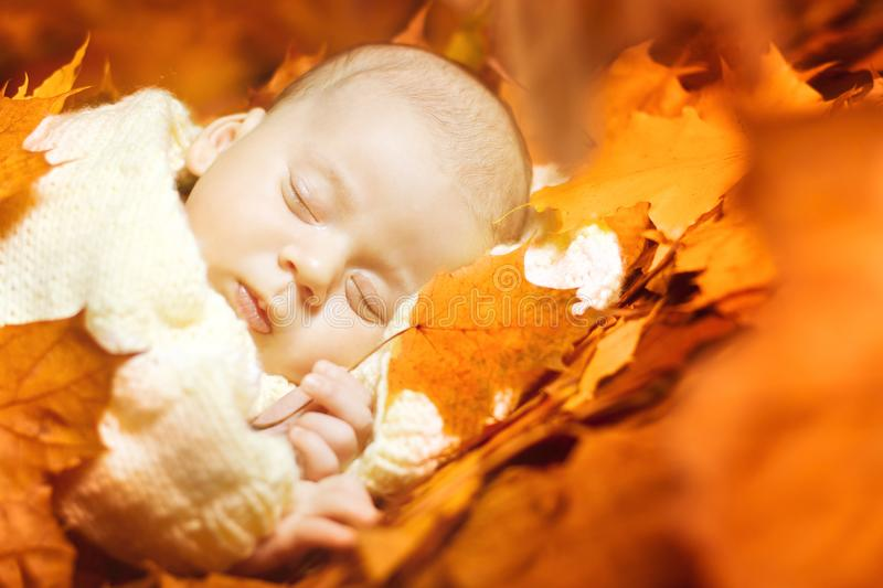 Autumn Newborn Baby Sleep, New Born Kid Sleeping in Fall Leaves. Child one month old royalty free stock photography
