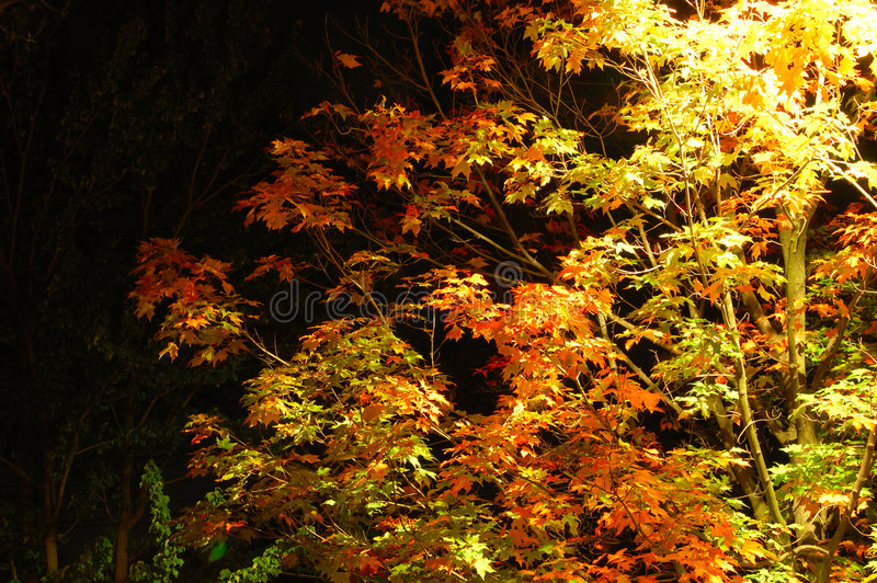 Download Autumn night stock image. Image of outdoor, deciduous - 3457541