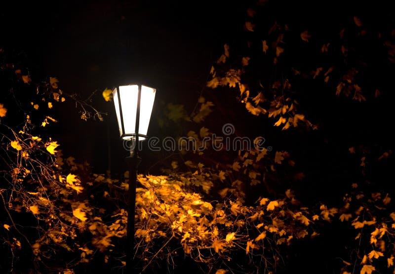 Autumn night. Street light in an park in Prague on a windy Autumn night stock image