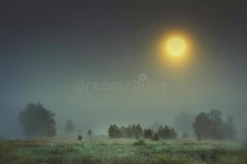 Autumn night landscape of cold foggy nature with large bright yellow moon in sky. Moonlight falls on trees and grass in fog. melancholic landscape of night royalty free stock photos