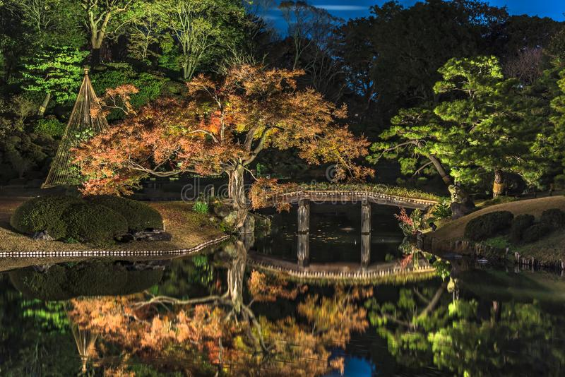 Autumn night light-up of big pine trees around a pond with a wooden bridge on a islet in the garden of Rikugien in Tokyo in Japan. Autumn night light up of big stock images