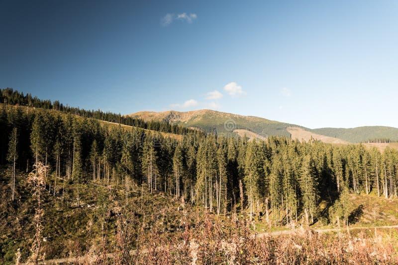 Autumn Nizke Tatry-bergen met bos door hout het oogsten, gedeeltelijk rotsachtige heuvels en blauwe hemel in Slowakije wordt verw stock foto