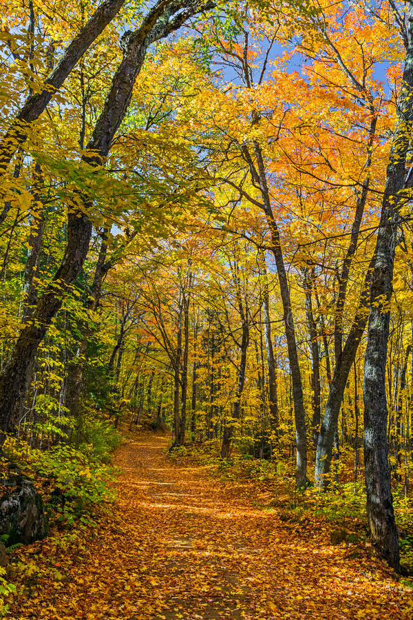 Autumn North Wood royalty free stock photography
