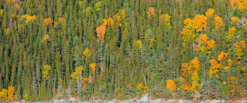 Autumn Norwegian misturou a textura da floresta fotos de stock royalty free