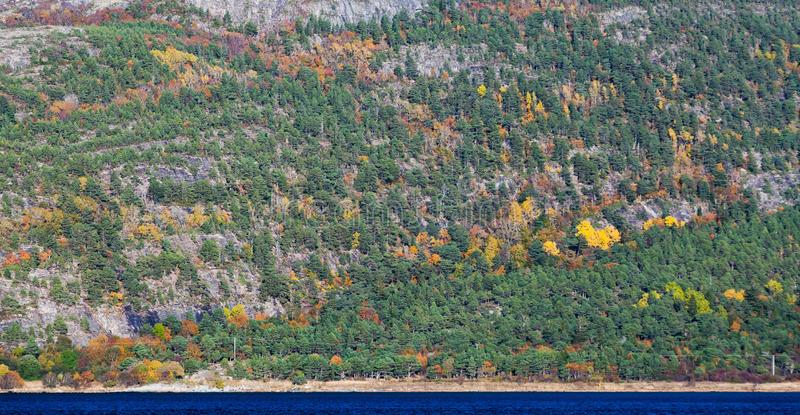 Autumn Norwegian mixed forest background royalty free stock photos