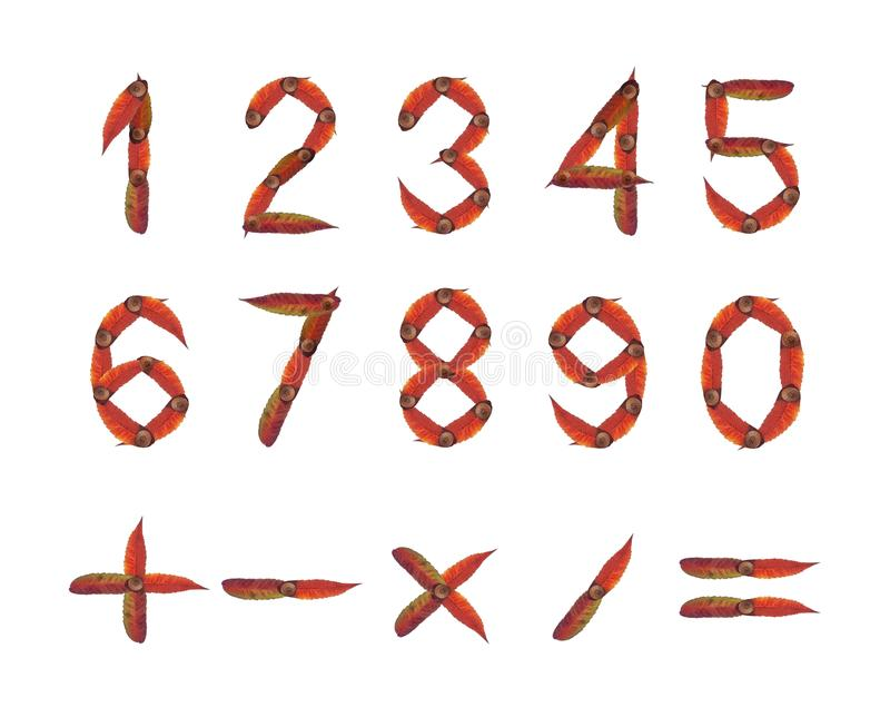 Autumn numbers. Numbers and mathematical symbols made from autumn leaves and acorns royalty free stock image