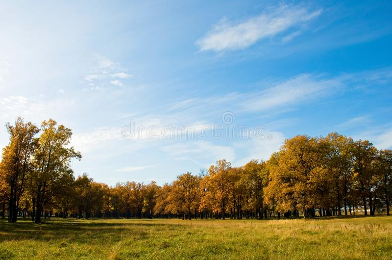 Autumn in the oak grove royalty free stock photos