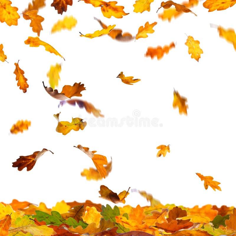 Download Autumn Oak Leaves illustrazione di stock. Illustrazione di disegno - 56882576
