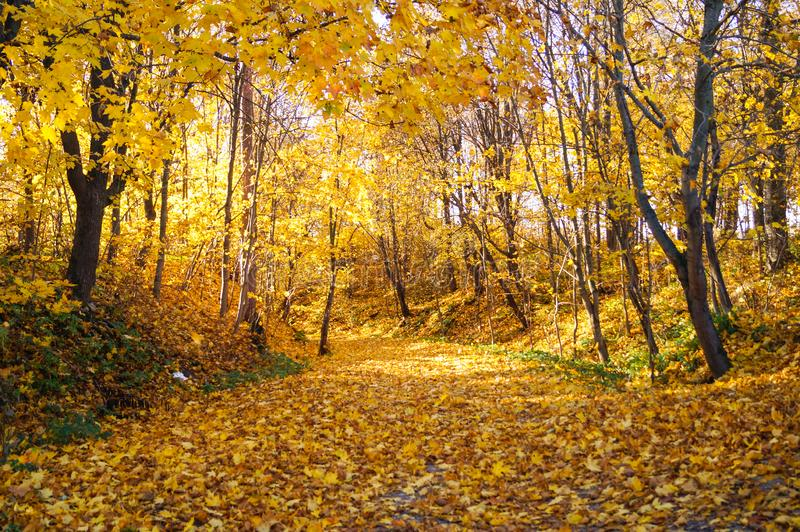 Autumn October colorful park. Foliage trees alley in park royalty free stock photo
