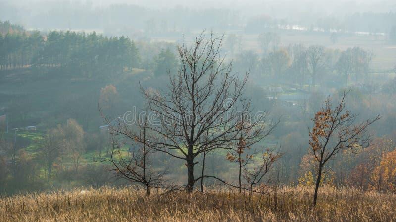 Autumn October Deciduous Forest dans les collines Paysage panoramique photos stock