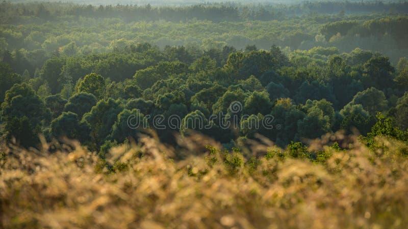 Autumn October Deciduous Forest dans les collines Paysage panoramique image libre de droits