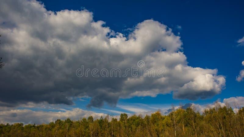 Autumn October Deciduous Forest no fundo do céu azul e nas nuvens brancas imagem de stock royalty free